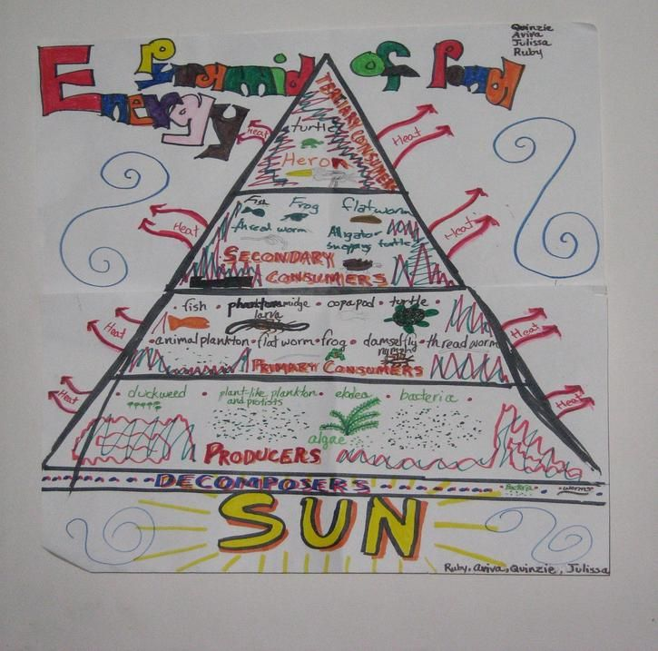 Producers Consumers And Decomposers Pyramid Science Anchor Charts 7th Grade Science 5th Grade Science