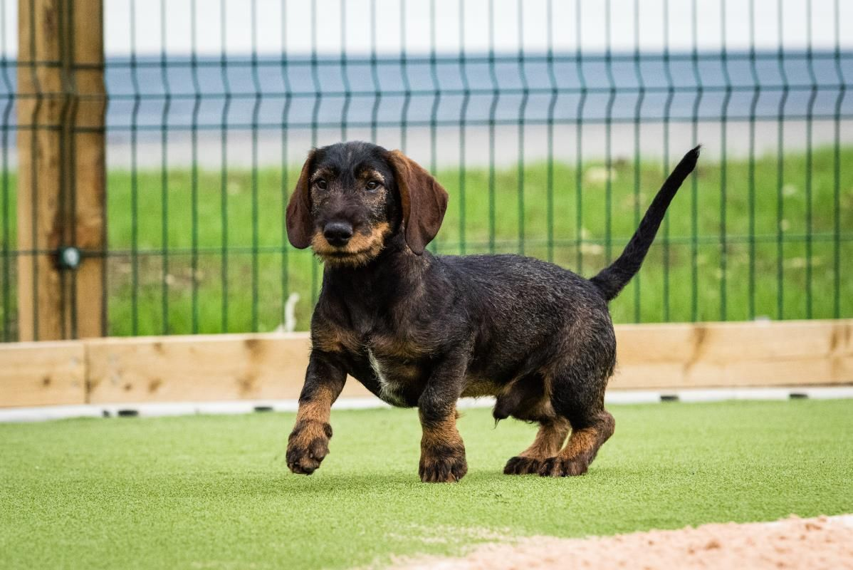 Stanley Rehoming Unusual Dog Breeds Dogs