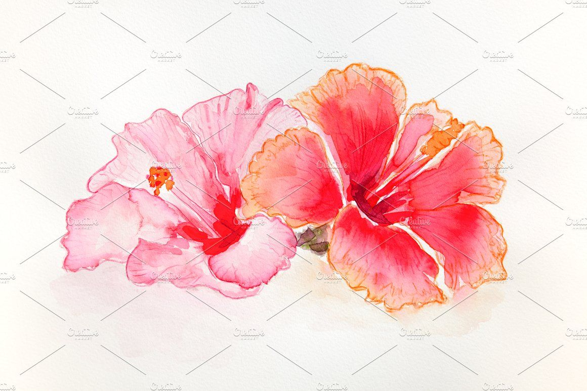 Hibiscus Flowers Watercolor With Images Hibiscus Drawing