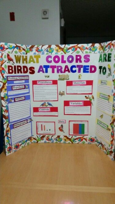 What Colors Are Birds Attracted To Home Decors And Interior