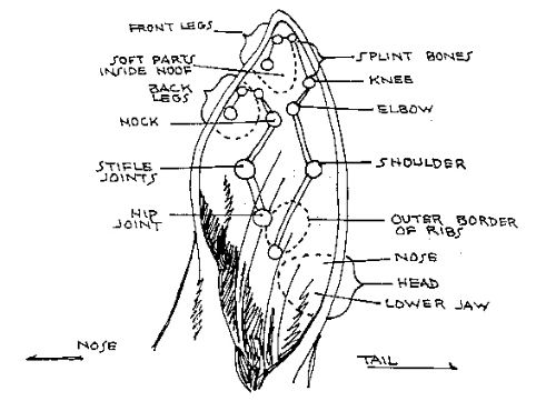 Here is a picture of an horse ear and it has been labeled to map out here is a picture of an horse ear and it has been labeled to map out ccuart Image collections
