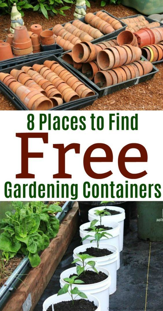 8 Places to Find Free Gardening Containers - One Hundred Dollars a Month