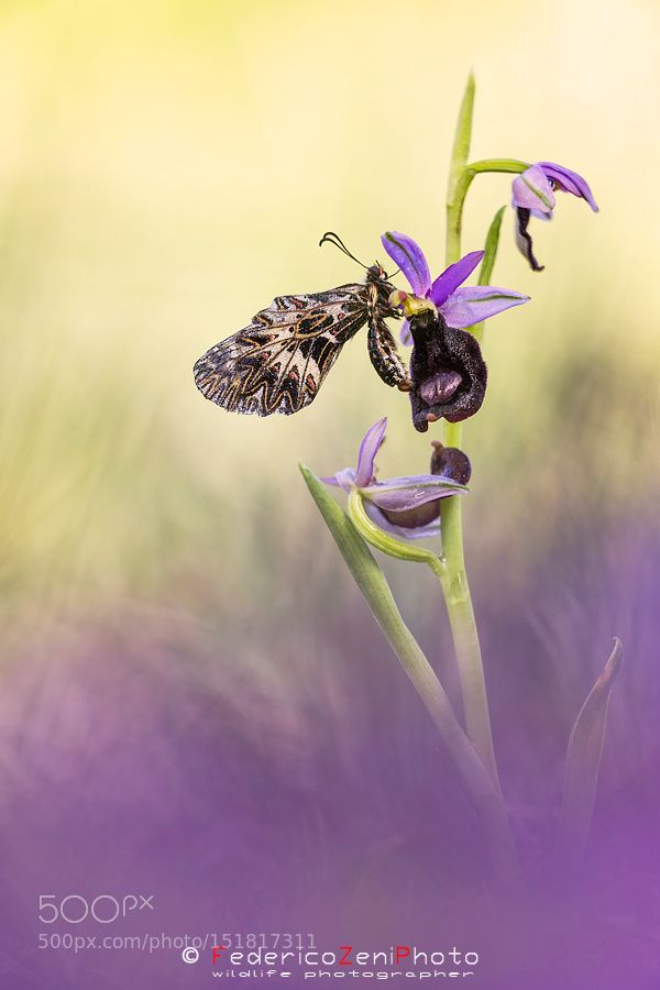 Aggrappata all'orchidea by federicozeniphoto Macro Photography #InfluentialLime