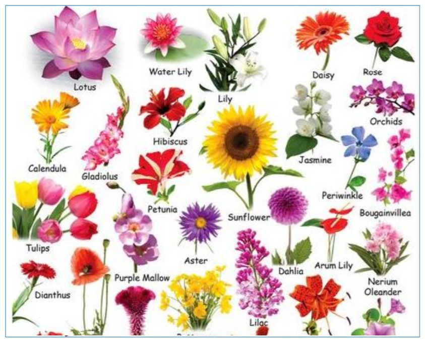 Grade 3 Year 3 English Vocabulary Names Of Flowers Idioms Proverbs Expressions Using Flower Names N Flower Names Flower Chart Different Types Of Flowers