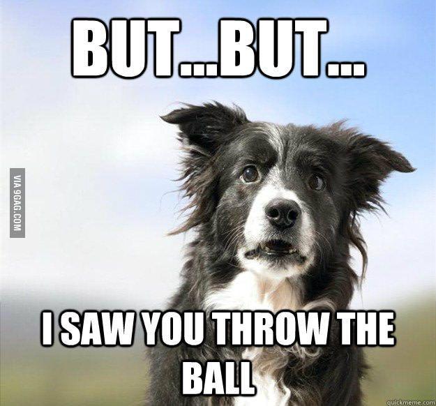 img-9gag-fun.9cache.com photo 5861831_700b.jpg   Funny dog ...