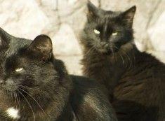 Photo of Blog sobre perros y gatos, clasificados, tienda de mascotas, fotos y videos. – …