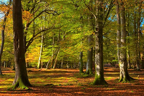 New Forest Early Autumn By Helen Dixon Landscape Photography New Forest National Parks