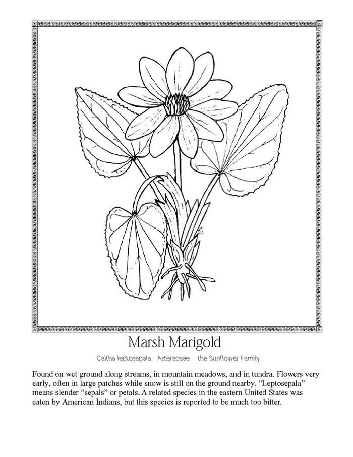 a09ae04242e4ae2ed88f3480ccb85c22 including wildflower coloring pages coloring free download printable on wildflower coloring pages likewise wildflower coloring pages coloring free download printable on wildflower coloring pages together with wild flowers coloring pages google search piante pinterest on wildflower coloring pages likewise wildflower coloring pages coloring free download printable on wildflower coloring pages