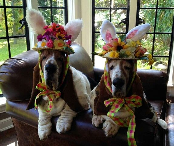 Easter basset hounds!