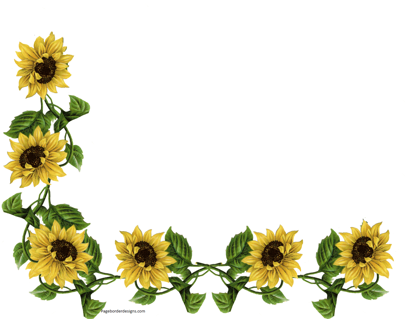 Sunflower Corner Border Design sadiakomal | Border Designs ...