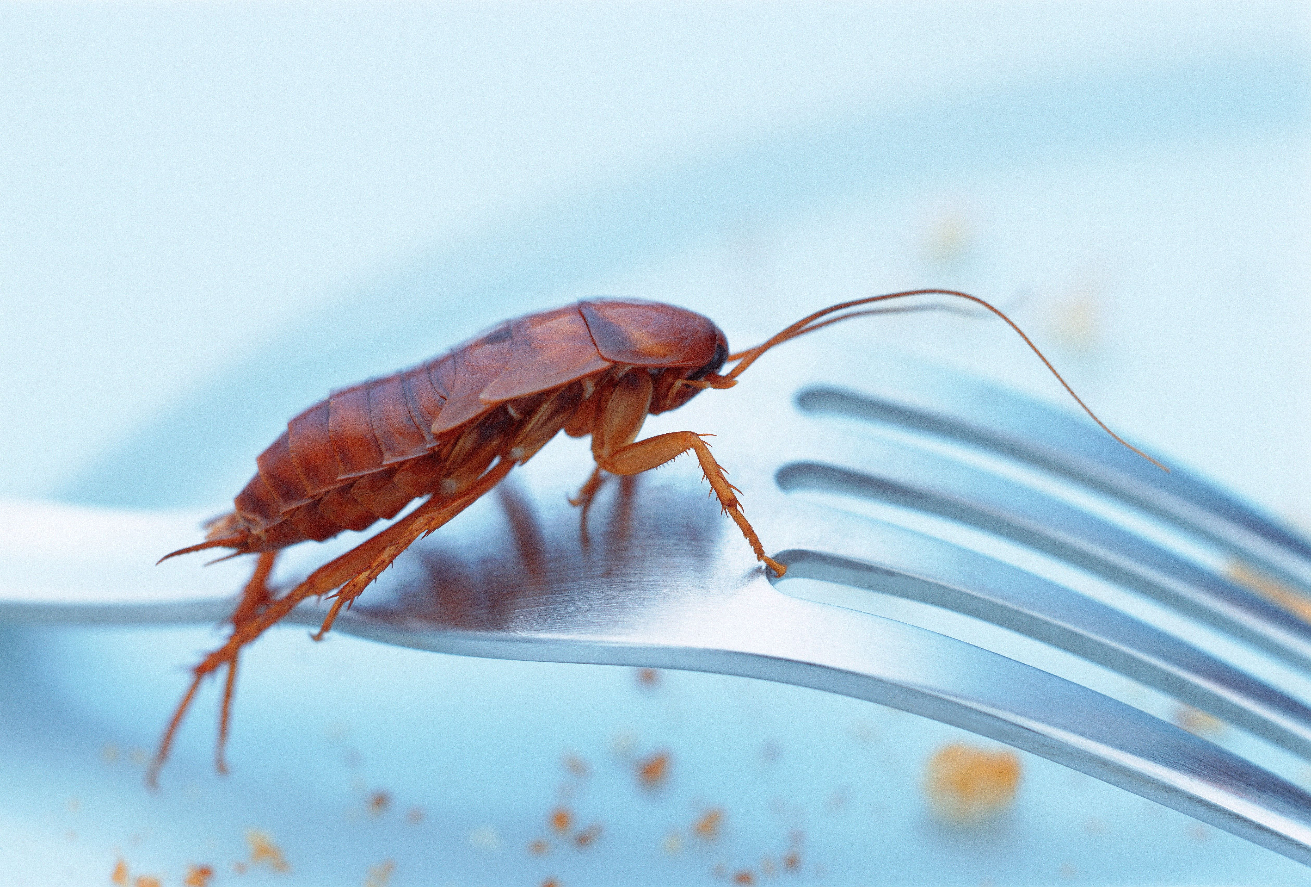 Cockroaches Are Big Business In China