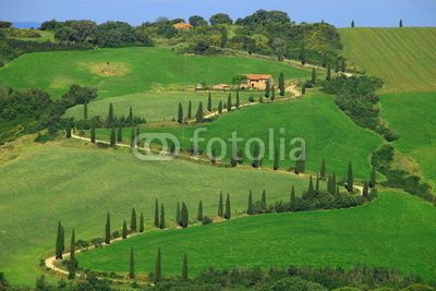Zypressenallee, La Foce, Val d Orcia, Toskana, Italien ,Sommer, s kurve,toscany