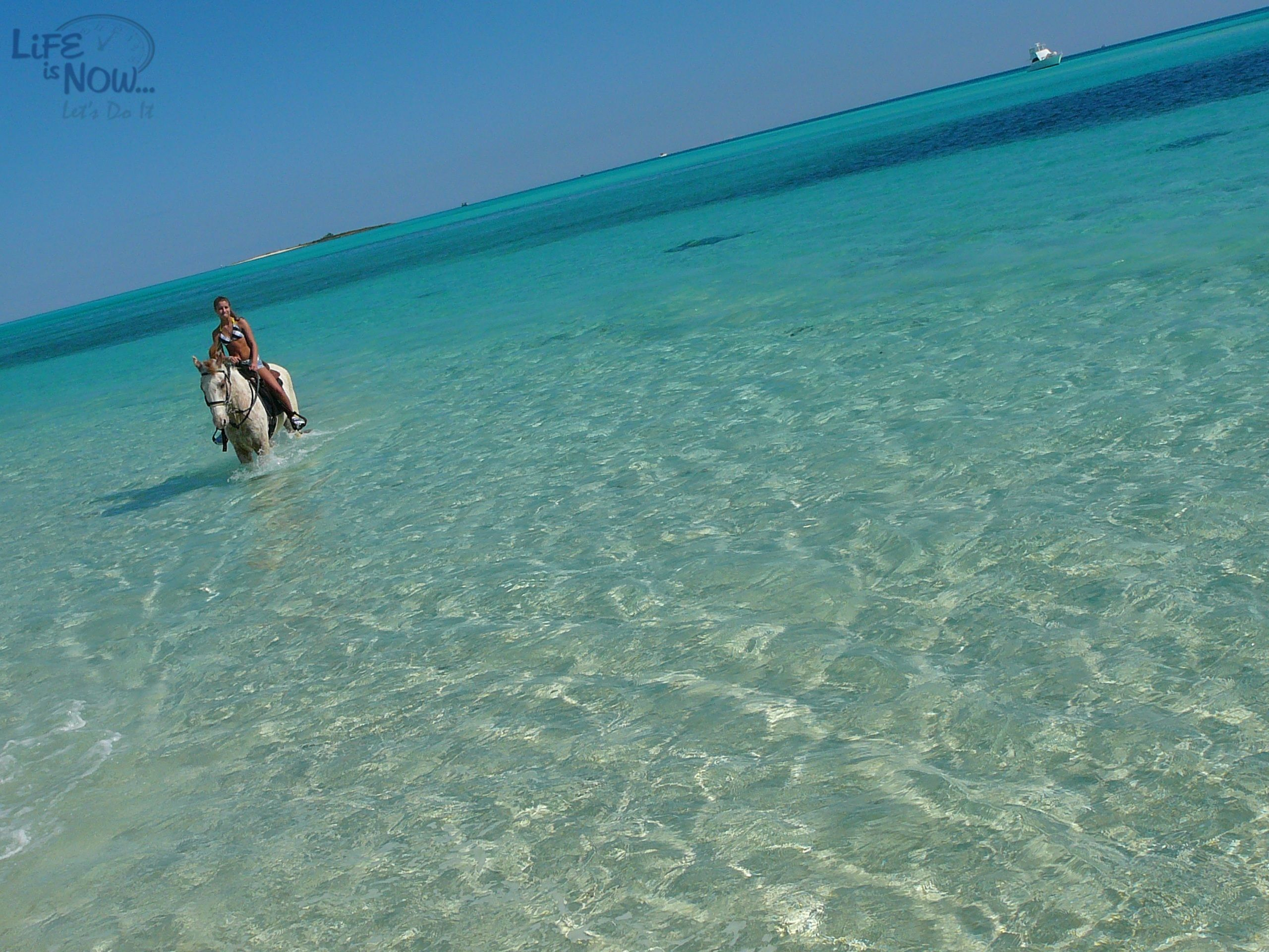 Trikk Pony Rides Bahamas Horseback riding, Beach