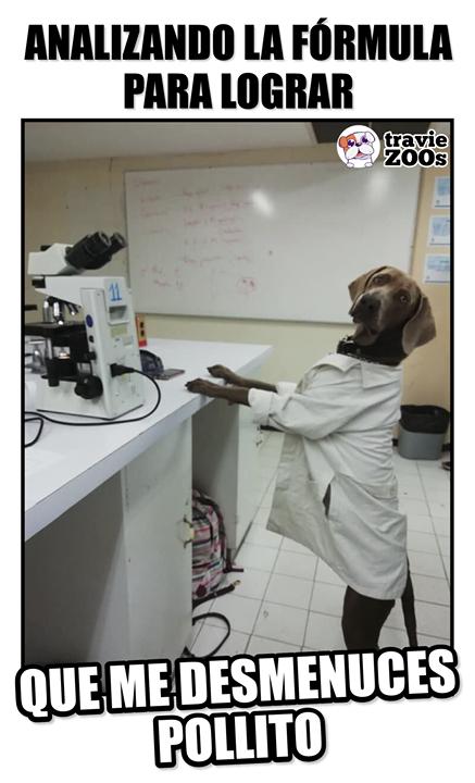 Seguimos Trabajando En La Investigacion Memes Divertidos Perros Peluditos