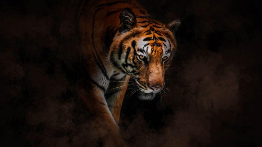 Tiger Hd Free Download Wallpapers Hd Wallpapers Hd Wallpaper