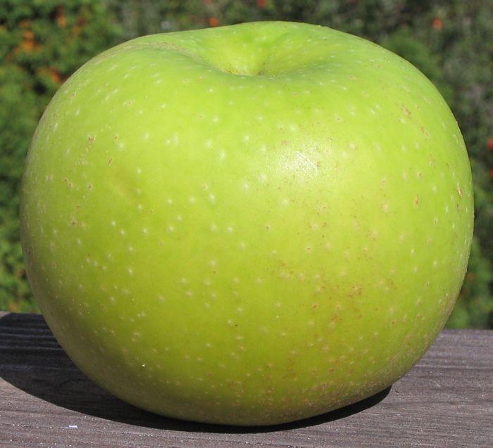 Grimes Golden ** Apple, Apple tree, Backyard garden