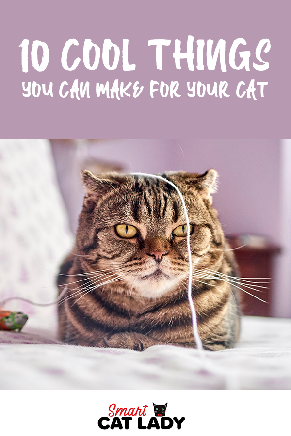 10 Cool Things You Can Make For Your Cat Cats Kitten Care Cat Care Tips