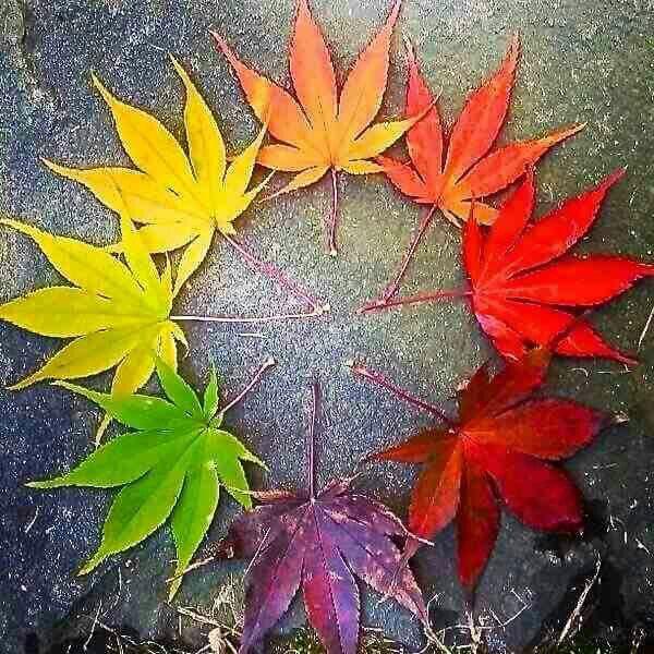 Cores de otoño
