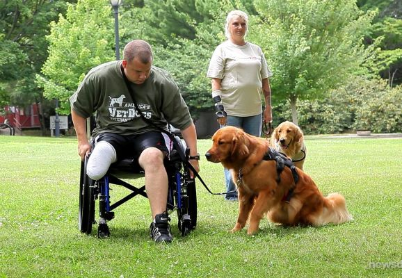 Li Charity Trains Service Dogs For Military Vets Service Dogs