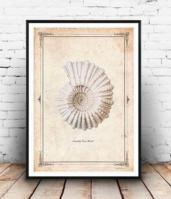 Seashell Vintage neo retro animals sea drawing por SoulArtCorner