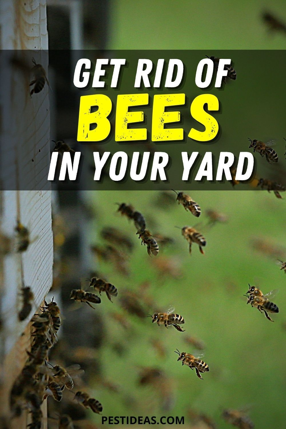 Get Rid of Bees in Your Yard in 2020   Getting rid of bees ...