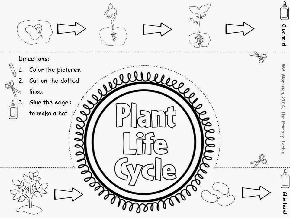Plants, First Grade Time Lapse Photography, and FREEBIES