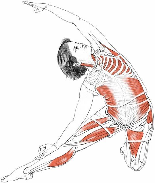 Parighasana Gate Latch Pose Via Leslie Kaminoff Yoga Anatomy