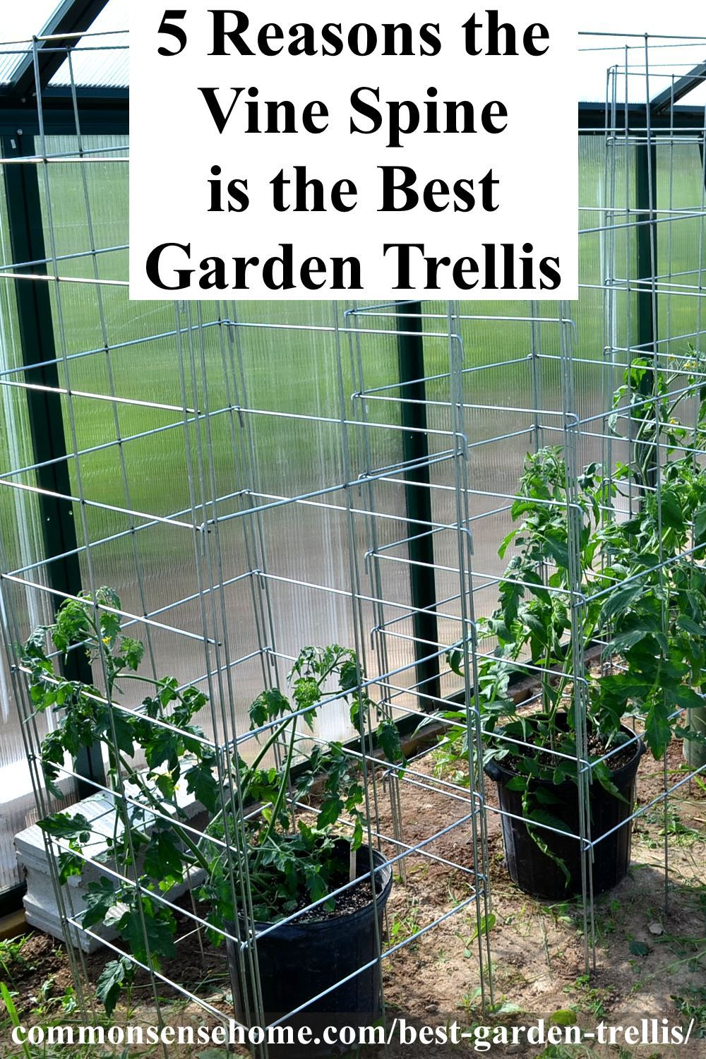 5 Reasons The Vine Spine Is The Best Garden Trellis With Images