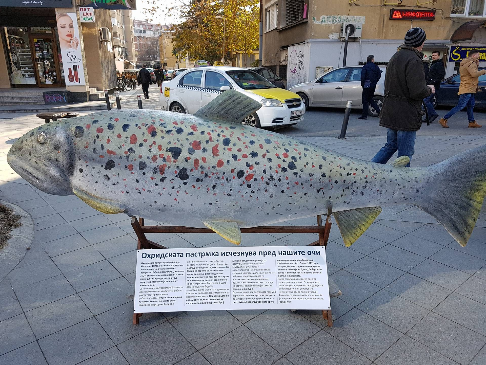 Уметничка герила акција: Џиновска пастрмка во Скопје
