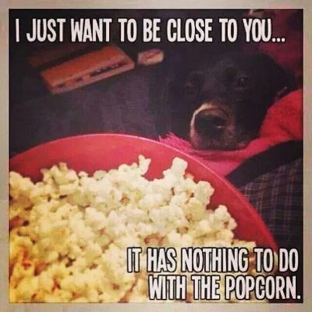 Suuuure Dog Quotes Funny Funny Animals Funny Animal Pictures
