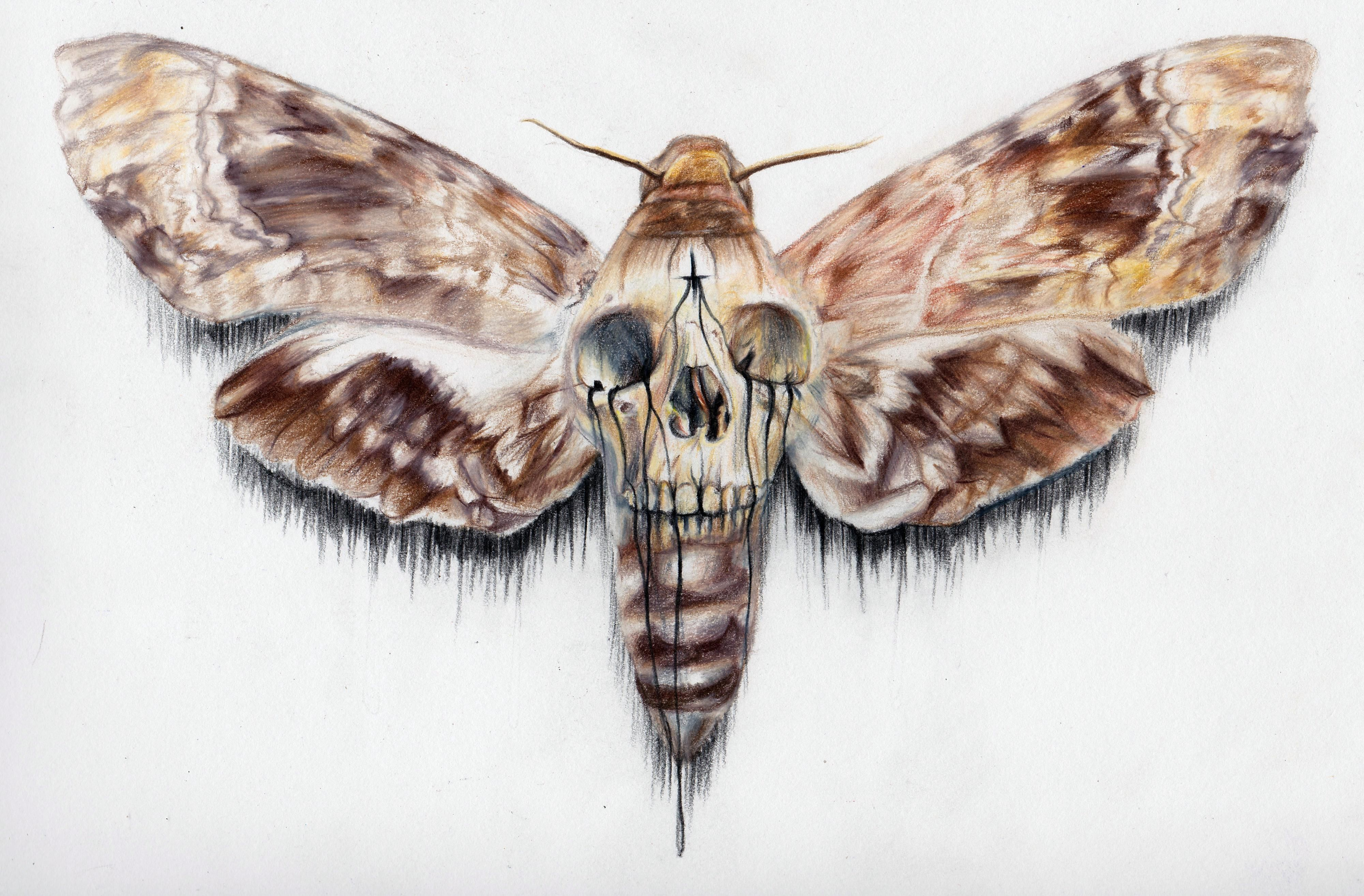 Simple Skull Moth Tattoo Google Haku Moth Tattoo Tattoos Body Art Tattoos
