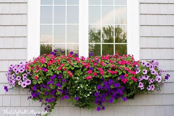 Finestre fiorite la soluzione ideale per finestre e balconi possibile far piantare i fiori - Fiori da finestra ...