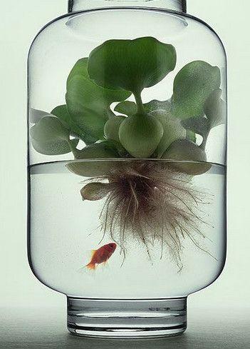 9 ideas de Pinterest para decorar tu casa con plantas — cribeo