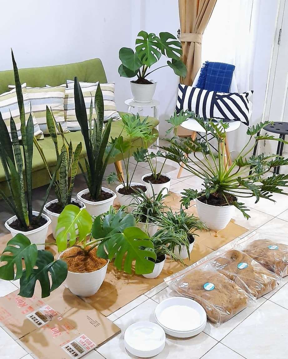 thank God, this morning finished sending 11 potted plants to - #homedecor