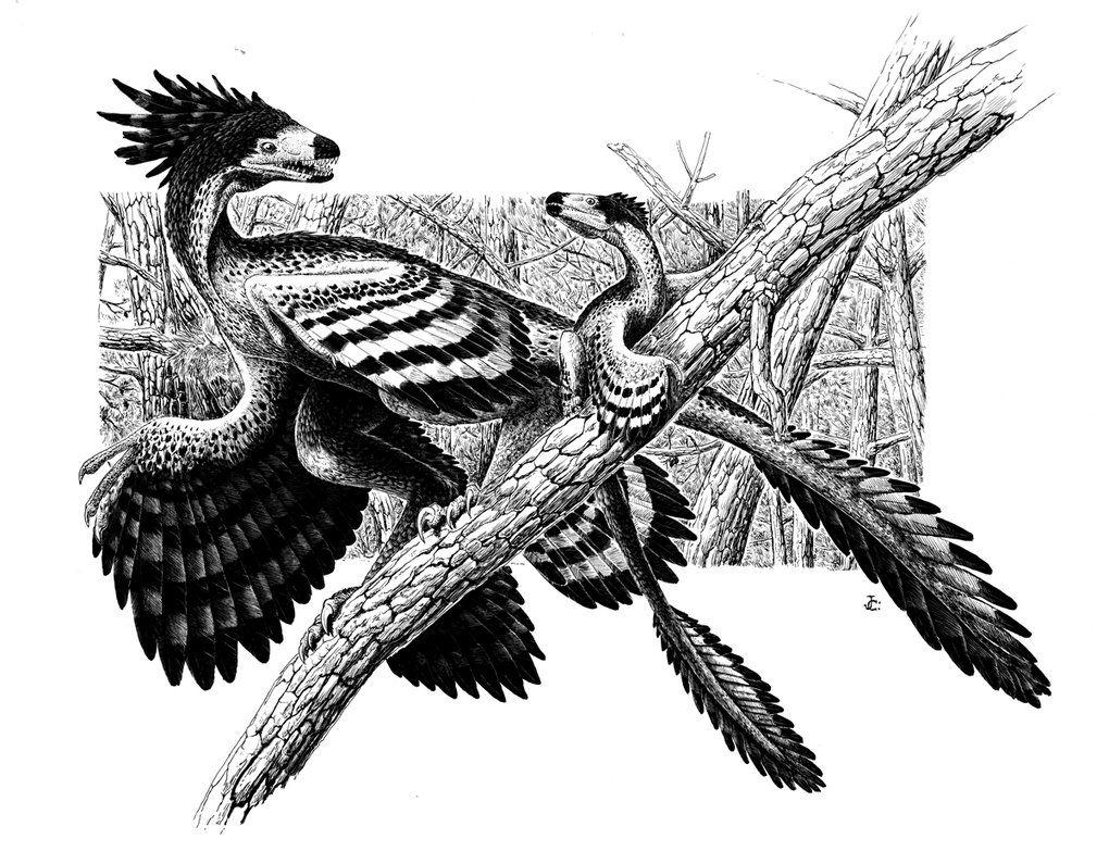 microraptor gui by Onikaizer