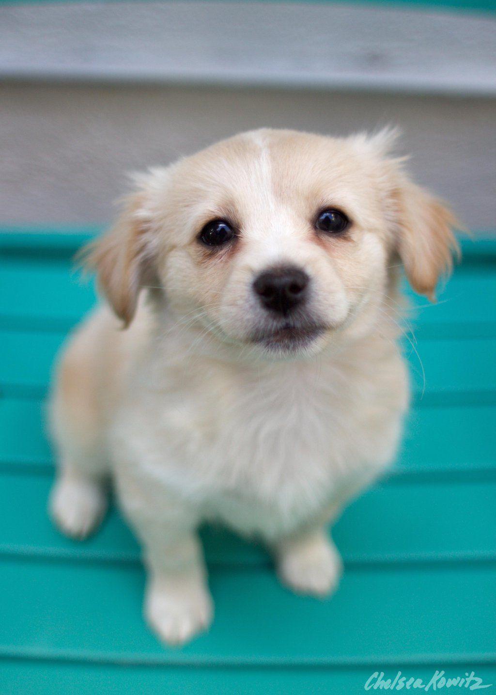 Gayweho Dogs 4 U On Dogs Labrador Retriever Animals