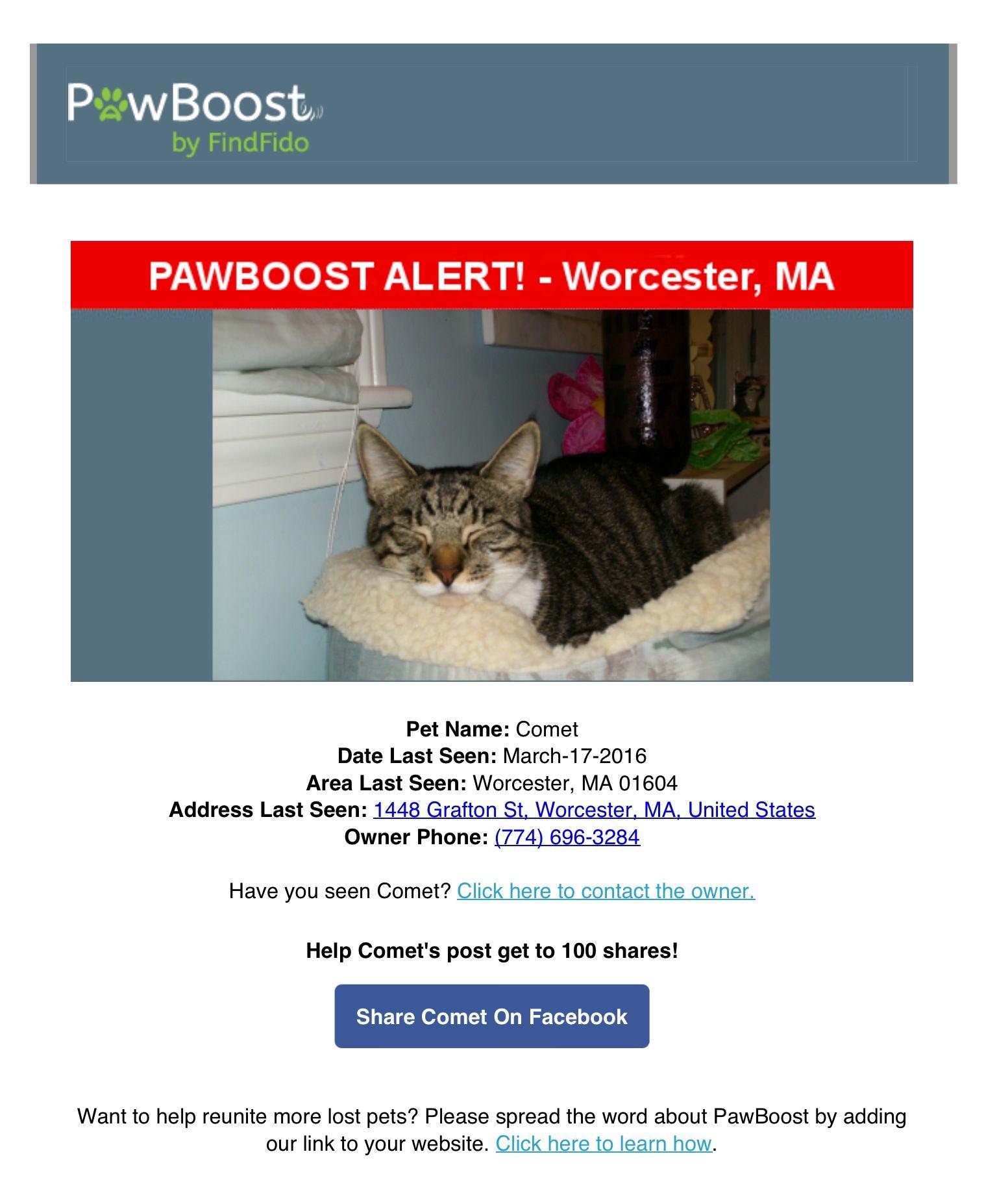 Lost Cat Named Comet Worcester Ma Pet Names Lost Cat Cat Names