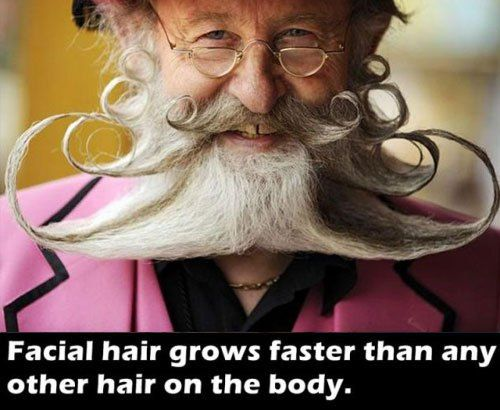 Admirable Interesting Health Facts Thechive Beards Mustaches Facial Natural Hairstyles Runnerswayorg