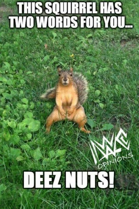Funny Squirrels In 2020 Squirrel Funny New Funny Jokes Funny Good Morning Memes