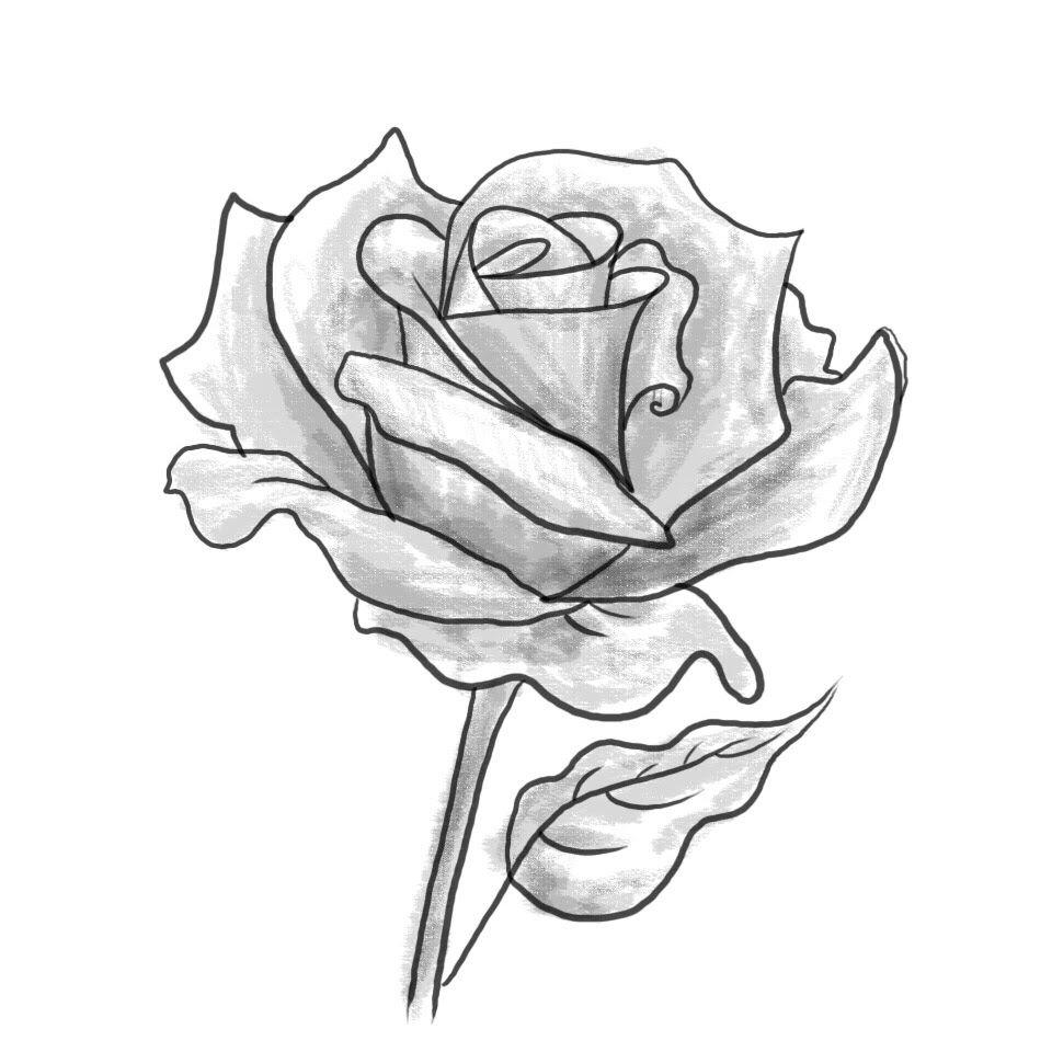 Draw Draws Drawing Drawings Art Cizim Karakalem Charcoalpencil Rose Drawrose Cizimler Cizim Fikirleri Cizim