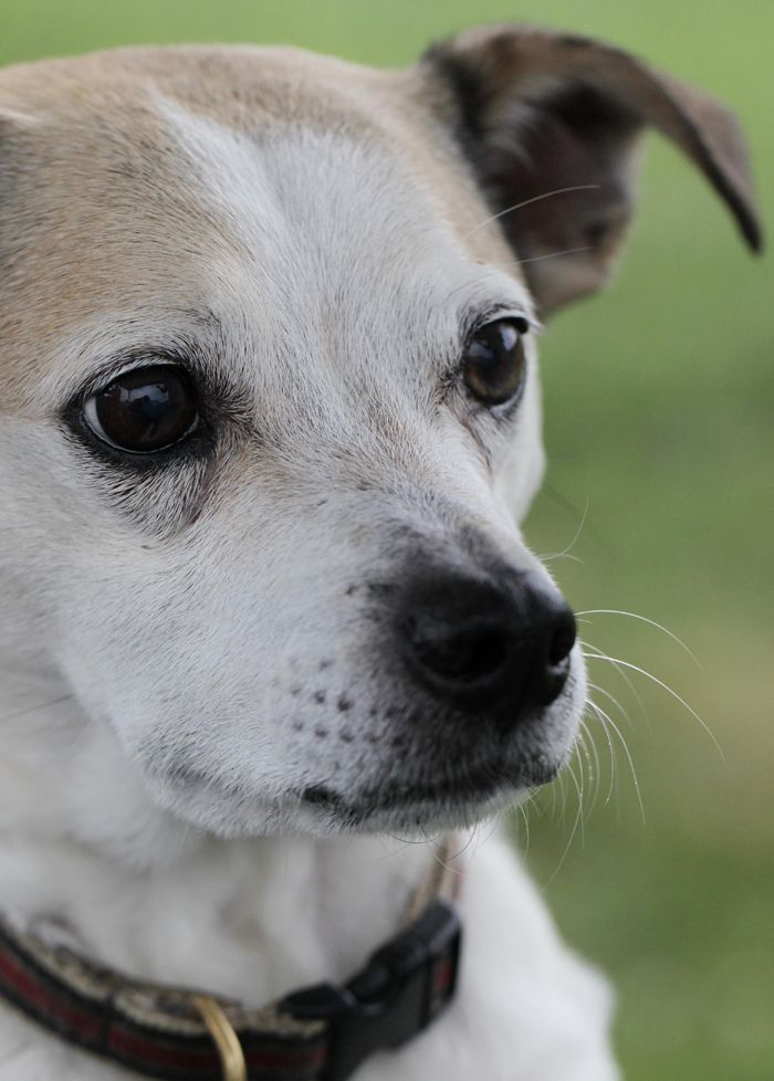 Why Adopting An Older Pet Makes Sense Op Ed Pets Cute Animal