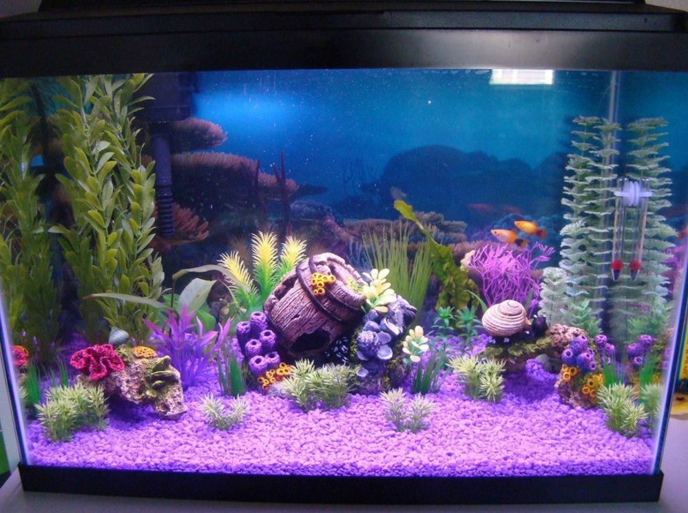 grreat choice 20 gallon aquarium | fish tanks and ... 10 Gallon Fish Tank Ideas