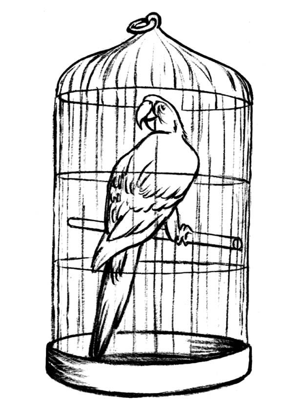 Parrot In Bird Cage For Sale Coloring Pages
