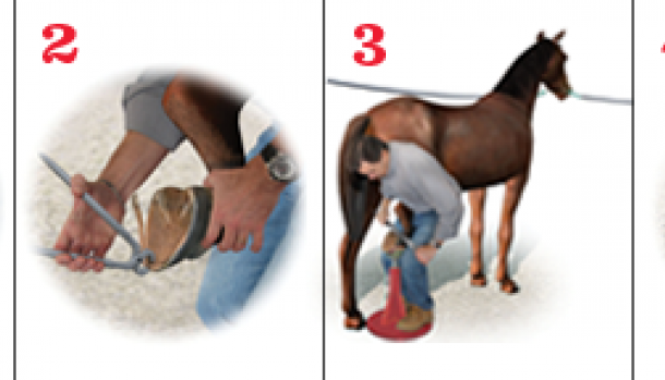 How to Shoe a Horse Horses, Texas, Houston oilers
