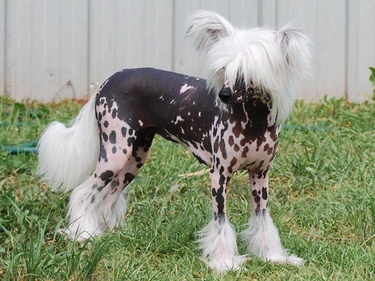 Hunde Fur Allergiker Und 10 Nicht Haarende Hunderassen Im