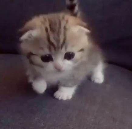 New cats memes funny kittens 38 Ideas #cats #funny #memes