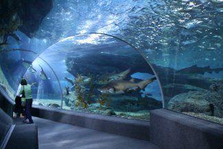 Ocean world decor for men and women