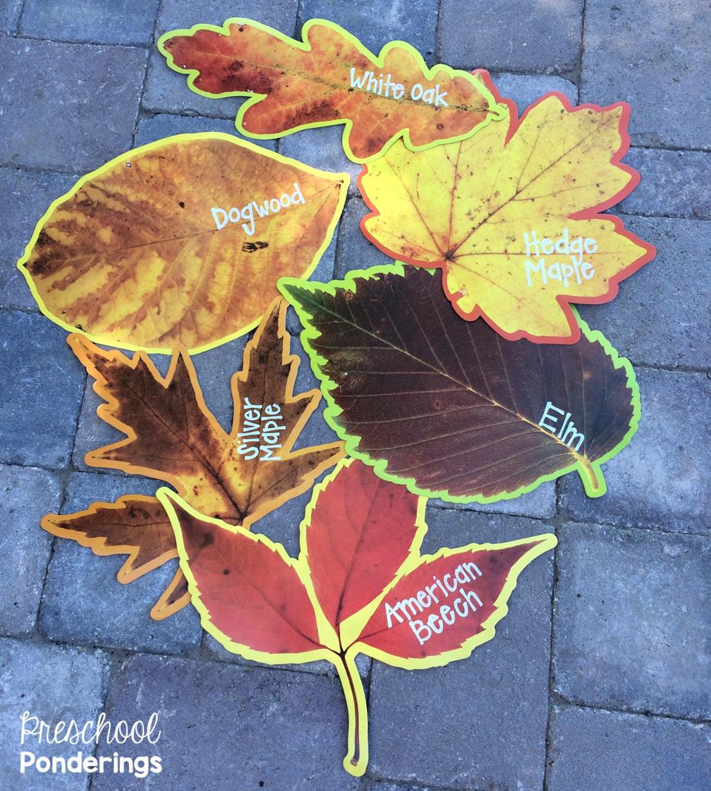 leaf identification activities