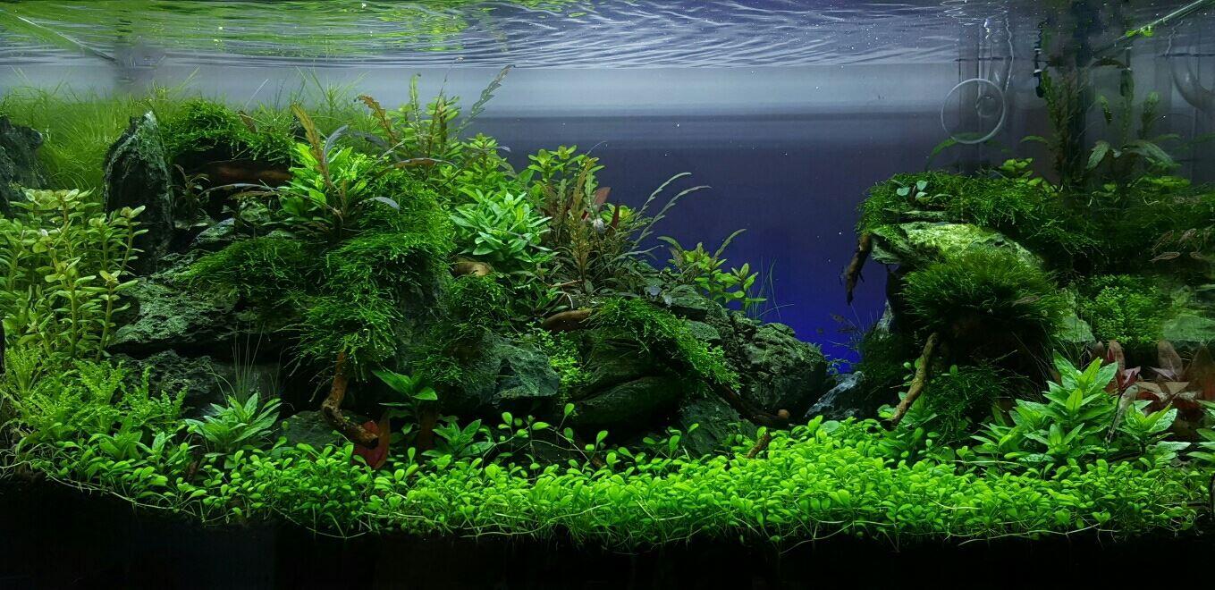 Daniel Wittgren 34 Days Since Start Goes Well Aquascape Ziolite Aquarium Dan