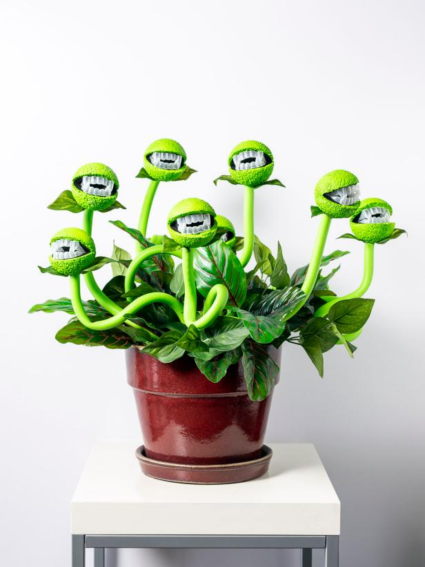 Photo of Halloween Decor: Turn a Peaceful Plant Into a Man-Eating Monster